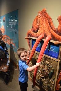 seattle aquarium 3
