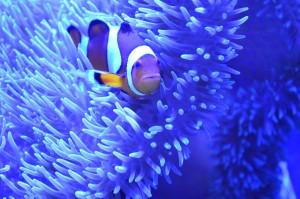 Look - it's Nemo