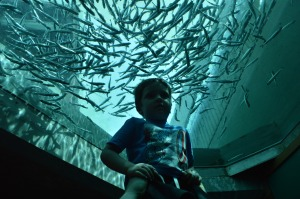 seattle aquarium 8